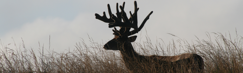 Contact Us The Pennsylvania Deer Farmers Association